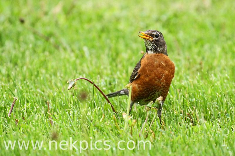 IMAGE: http://www.nekpics.com/img/s6/v140/p1220324650-4.jpg